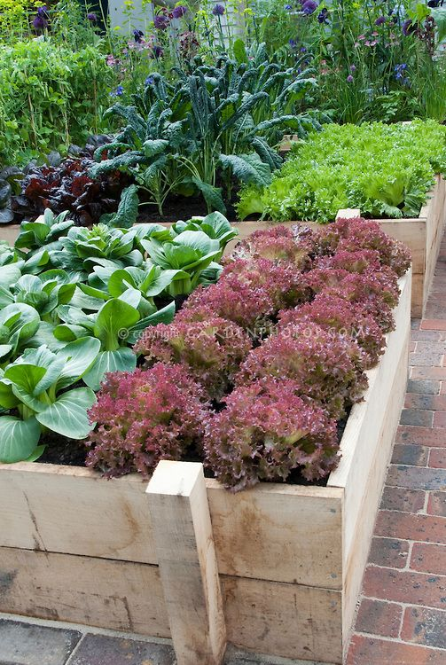 Raised Bed Vegetable Garden in Backyard