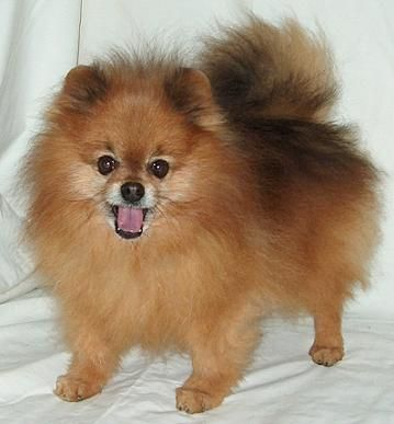 1000+ images about Pom Love on Pinterest
