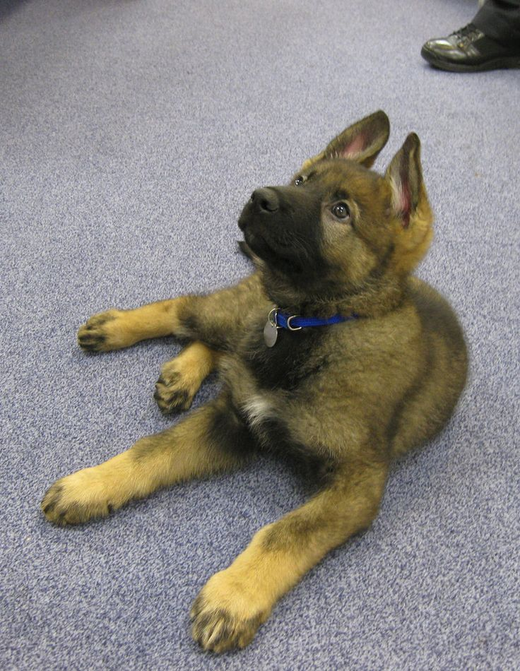 Treinamento de cachorro com Clicker