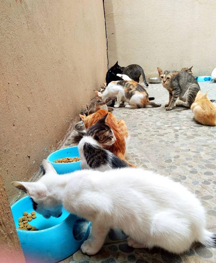 Nom nom nom ?. . #catsofinstagram # cats_of_instagram # funnycats #catslover # …