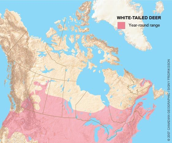 Range map for the White-tailed deer