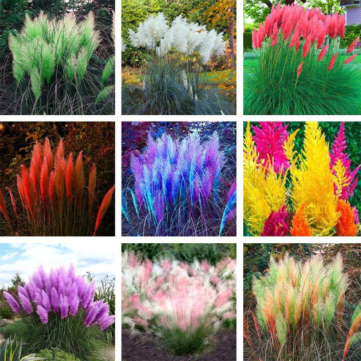 ... From China Flower Seeds Suppliers: New Rare Impressive Colorful Pampas  Grass Seeds Ornamental Home Garden Plants Flowers Seeds Bonsai Pot Home  Garden