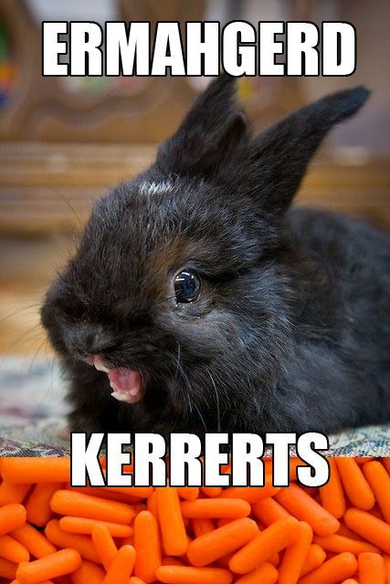 Oh, my God! Carrots!: Laughing So Hard, Funny Bunnies, Funny Pictures, Funny Stories, Funny Commercial, Funny Photos, So Funny, Guinea Pigs, Animal