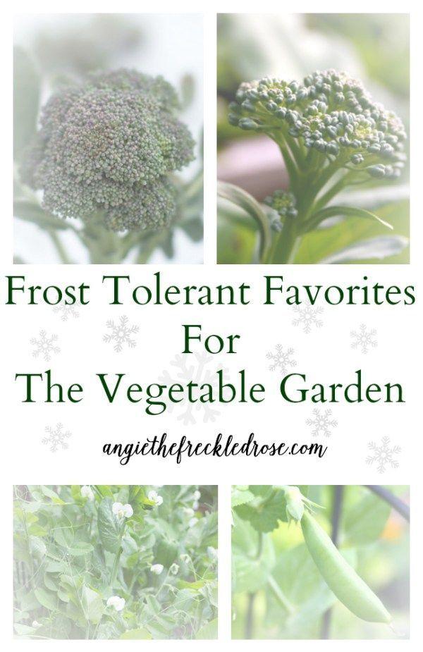 Frost Tolerant Favorites For The Vegetable Garden Fall 400 x 300