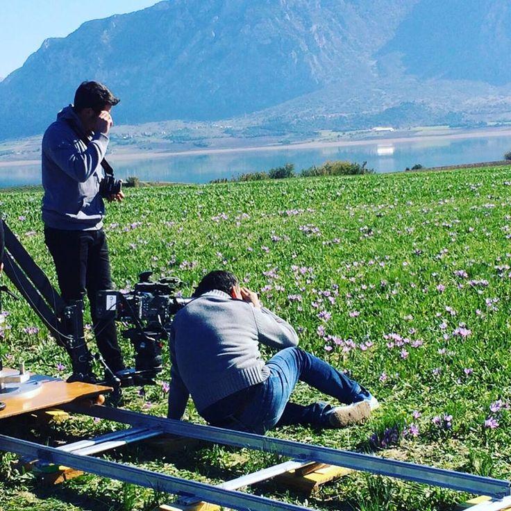A day of filming in the fields of #greek #saffron #krocuskozanis