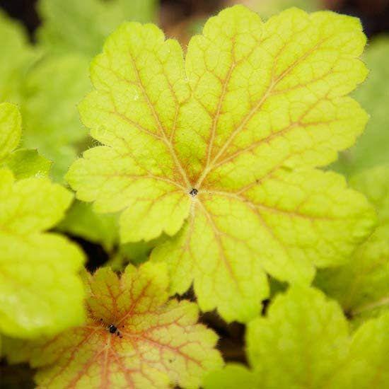 28 best Garden Wish List images on Pinterest Flower gardening - gartenplaner freeware deutsch