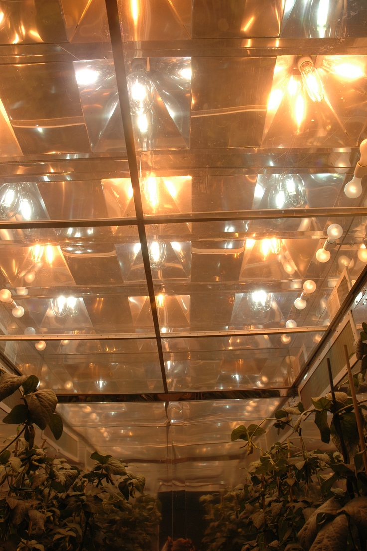 H-chamber with metal halide and high pressure sodium lights