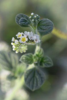 Enchantment by Natalya Antropova #flower#NatalyaAntropovaFineArtFotografy#HomeDecor