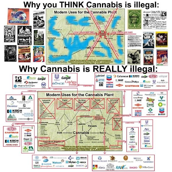5 Reasons Marijuana Should Remain Illegal