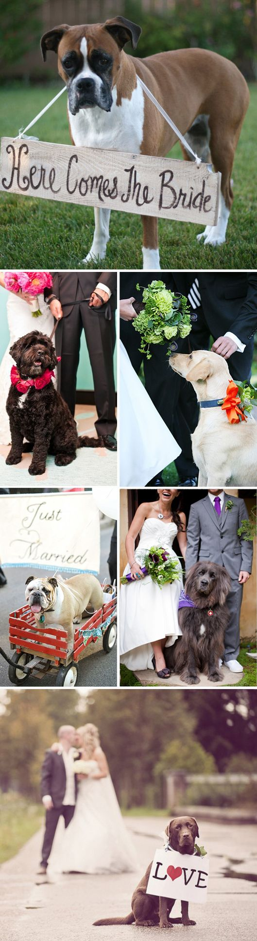 Tips for Including Dogs in Weddings - the #1 tip is to get a doggie attendant to help keep the day manageable