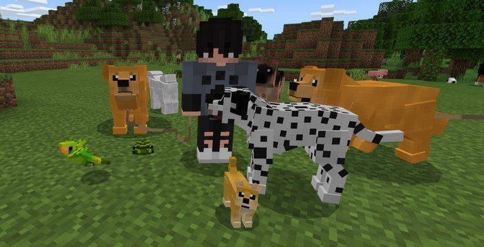 Domestic Pets Addon For Minecraft Pe 1 16 0 Dog Person Different Dogs Pets