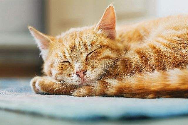 Derfor elsker katte tapefirkanter