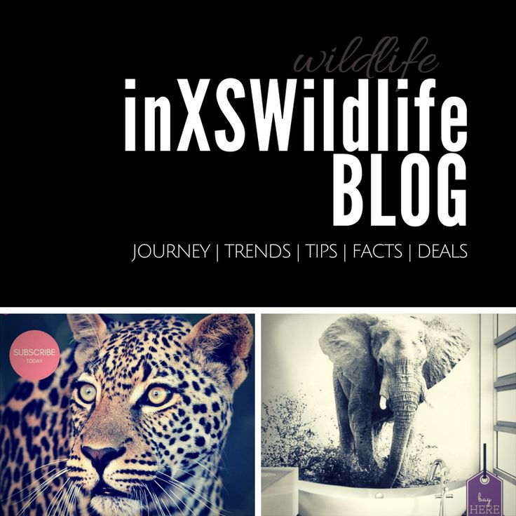 We've started a blog to share all the incredible wildlife experiences with you, our readers. Just like our name says it, we've been so fortunate and blessed to have wildlife sightings and photo opportunities in excess (inXS Wildlife). Be sure to subscribe to our newsletter so you never miss out on all the great stories, photos, videos, art and products we have to offer. #wildlifeblog #wildlife #wildlifephotography #inxswildlife #wildanimals