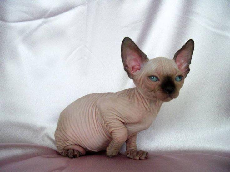 25 Best Cats Images On Pinterest