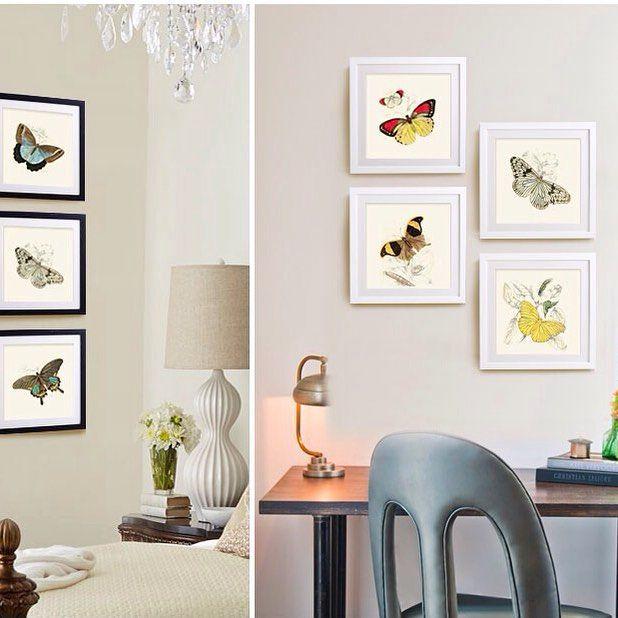 Butterfly by Jean-Baptiste Pierre Antonie de Monet Chevalier de Lamarck