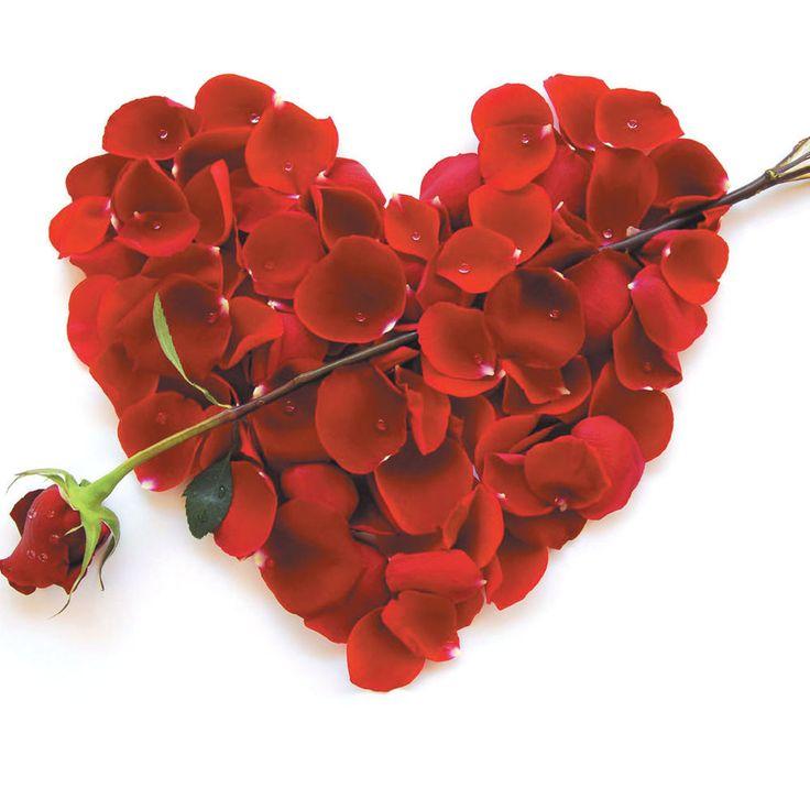 A Valentines Day Blank Card Husband Wife Boyfriend Girlfriend Partner Love Roses