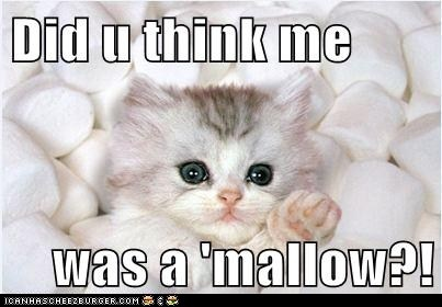 Did u think me was a 'mallow?!: Cats, Animals, Pet, Funny, Adorable, Kittens, Marshmallows, Kitty