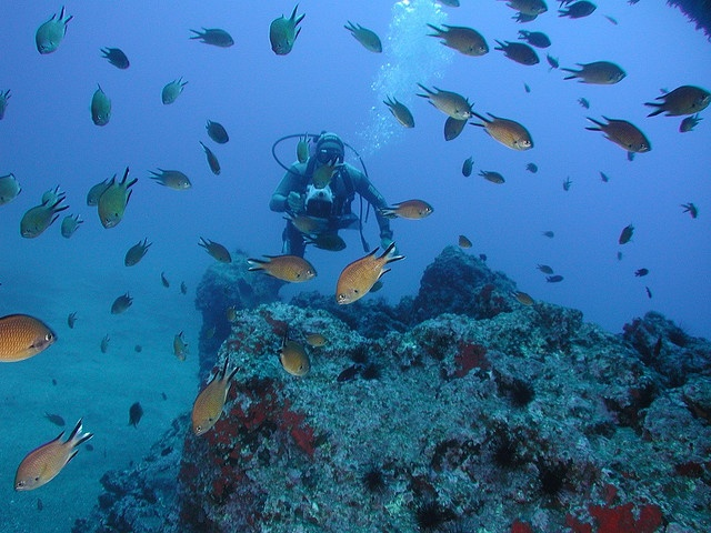 Diving, Madeira #Portugal