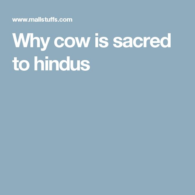 Why cow is sacred to hindus