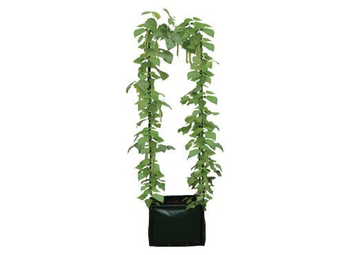 Buy Haxnick Pea&Bean Climbing Planter&Support from our Planters range - Tesco.com