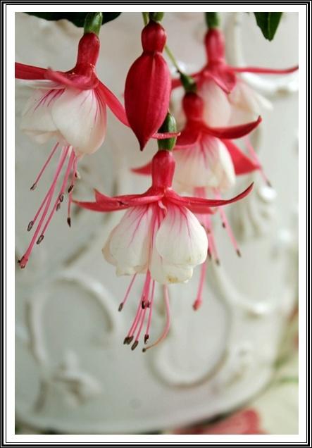 Verenpisara - Fuchsia