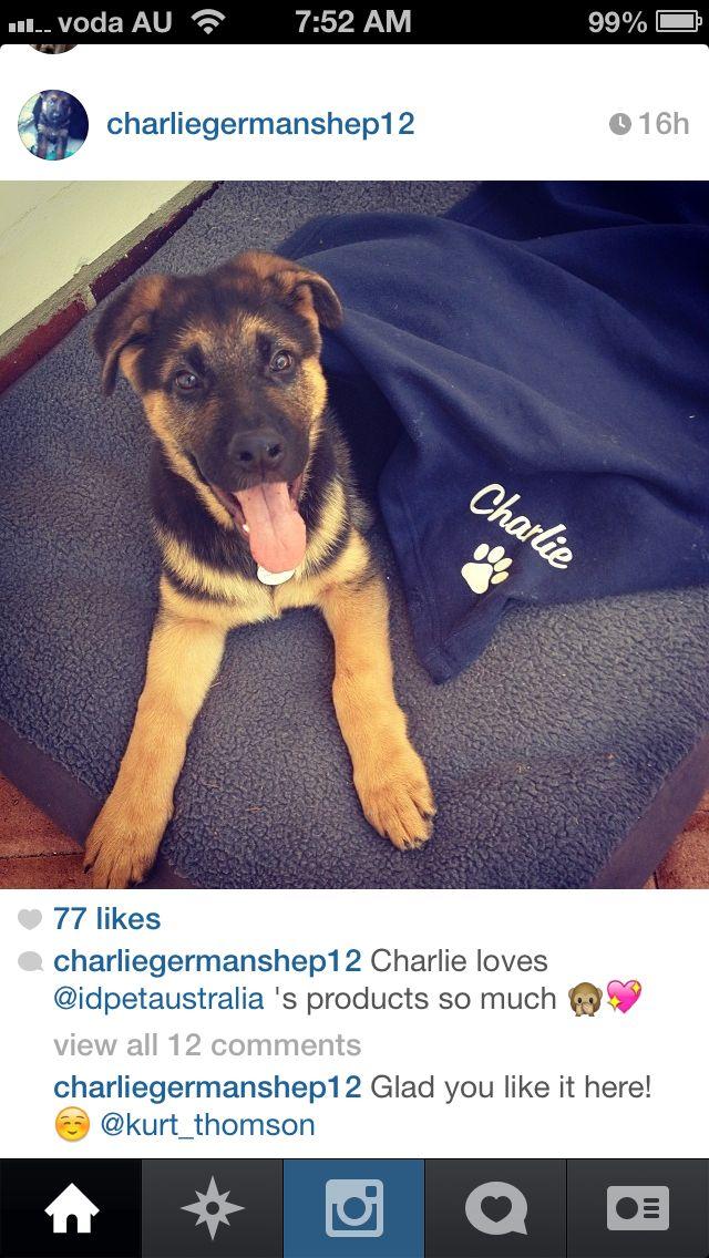 Charlie - wearing his custom ID pet tag and lying on his navy polar fleece IdPet blanket.