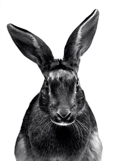 ... au pays des lapins | Photographe : Walter Schels