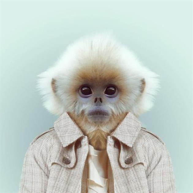 tumblr mkd241kQgx1qzfsnio5 1280 11 hipster animals Yago Partal photographer