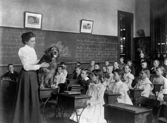 School Teacher Shows Dog To Schoolchildren An