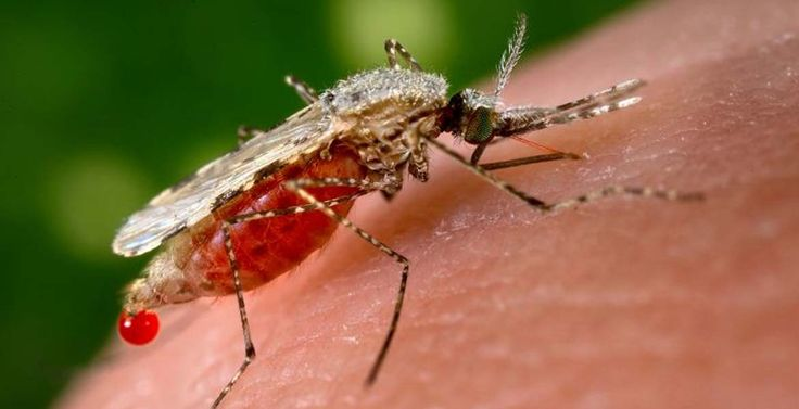 New Gene-Editing Technique Could Eliminate #Mosquito-Borne #Diseases