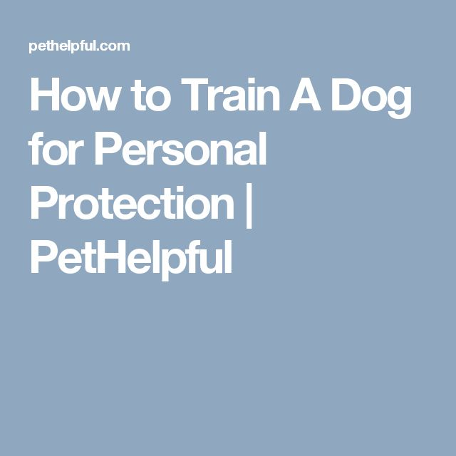 How to Train A Dog for Personal Protection | PetHelpful