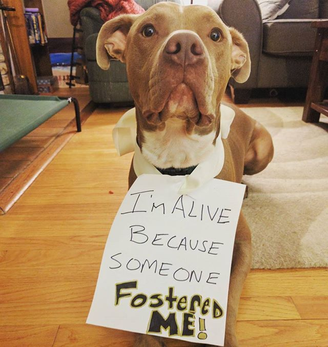 Madison Wisconsin Rescue Dogs