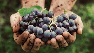 Bio Bloggando: Vino biodinamico: che cos'è e quali sono le differ...