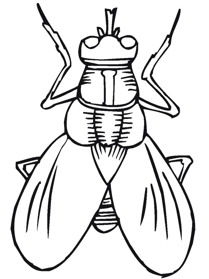 Cartoon Insect Coloring Pages Sketch Page