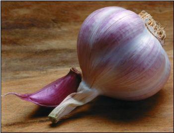 Plant Great Garlic - From 2005 MOTHER EARTH NEWS, this article includes regional expertise