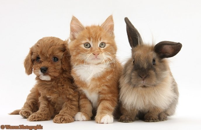 17 Best images about Kitten and rabbit on Pinterest | 7 ...