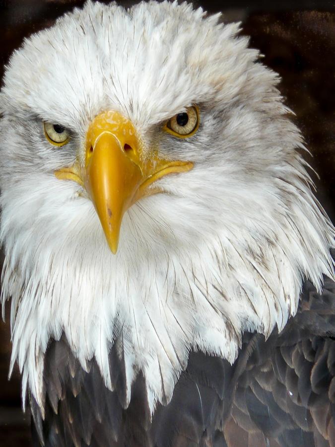 Bold Eagle Portrait by Jörg Hövel, via 500px
