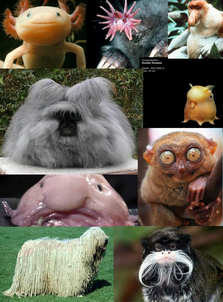 scary animals creepy animal things these glogster cute publish pets iron funny