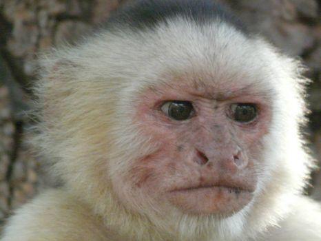 monkey business (540 pieces)