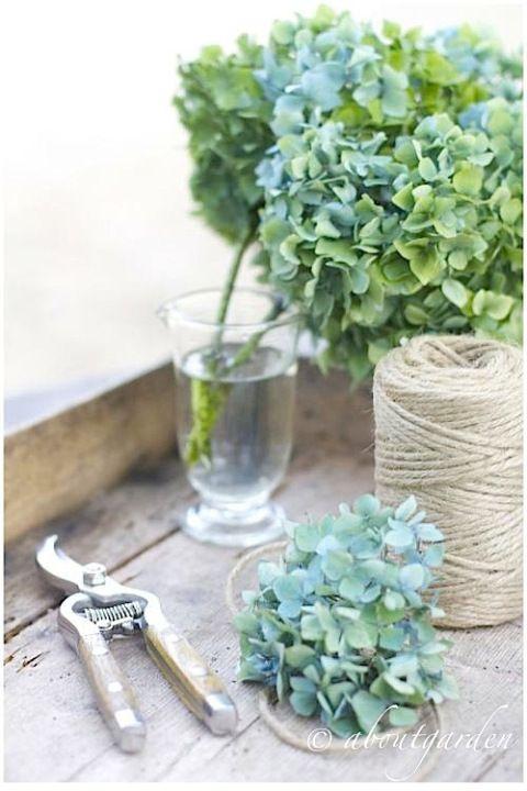 Come essiccare i fiori di ortensia