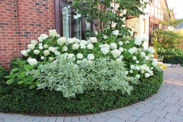 Low Maintenance Landscape Ideas Curb Appeal Flower Beds