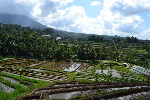 """Jatiluwih - A Bali i bambini vengono chiamati in base all'ordine di nascita: il primogenito Wayan, il secondo Made, il terzo Nyoman e il quarto Ketut! Che siano maschi o femmine poco importa: i nomi restano quelli, al limite si usa mettere """"Ni"""" prima del nome se è femmina, e """"I"""" se invece è un maschio: Ni Wayan se è una lei, I Wayan se è un lui."""