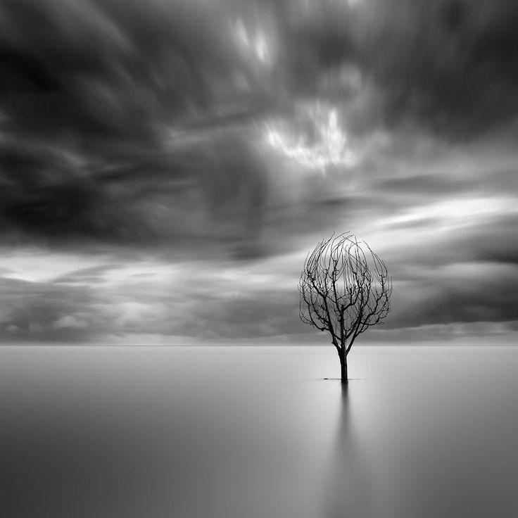 La Photographie minimaliste capte la Profondeur dramatique de la Nature en Noir et Blanc (4)