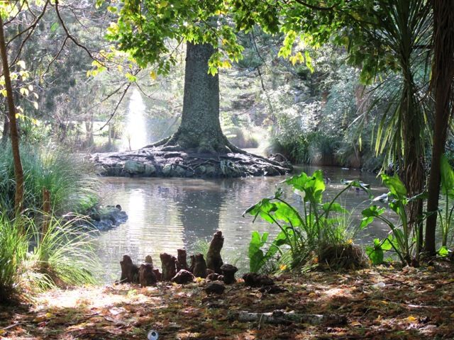 Duck Pond, Auckland Domain