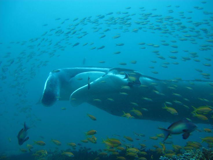 Diving in Tofo, Mozambique #diving #mozambique #tofo #tofoscuba
