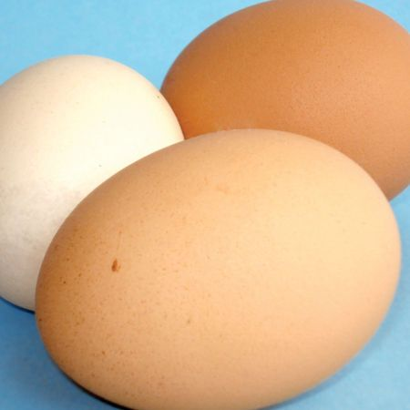 Eggs: Don't skip the yolk. The yolk is a good source of iron, and it's loaded with lecithin, critical for brain health, says nutritionist Dr Susan Kleiner via @Women's Health Australia