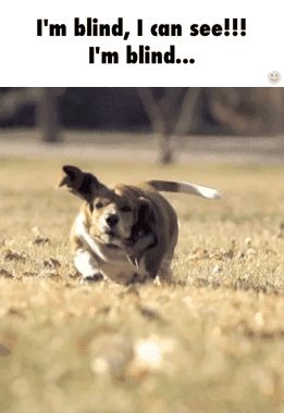 Most entertaining gif of a running dog you'll ever see