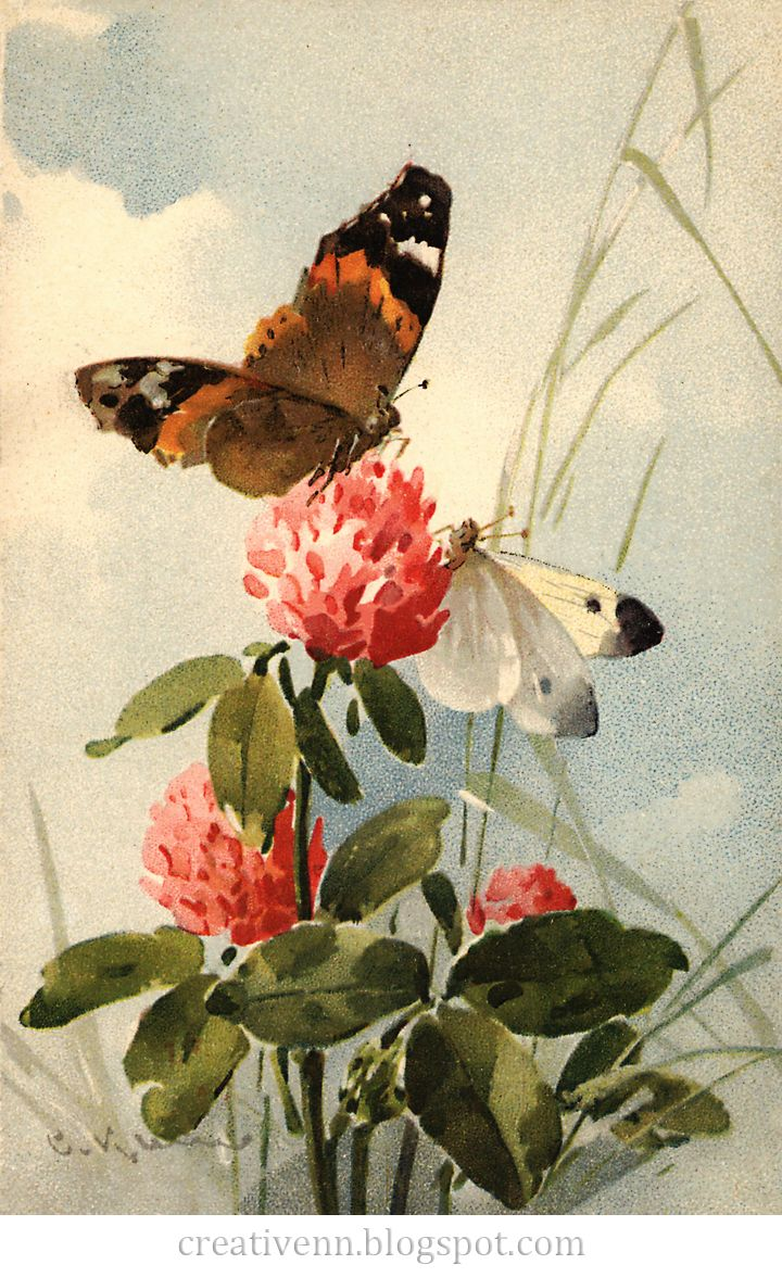 Vintage. Catherine Klein. Бабочки. Старинные иллюстрации.: ♥ Creative NN. Блог Альбины Рассеиной. ♥