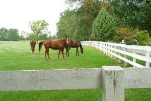 We represent some of the most sought after areas in the state of Virginia where you can find the perfect home for you, your family and your horses. All parts of Central Virginia, the counties of Albemarle, Fluvanna, Greene, Orange, Nelson, Madison, Louisa and Amherst, and the towns of Charlottesville, Keswick and Crozet are our areas of expertise. We enjoy helping our clients buy and sell their homes, estates, horse properties and farms in these great communities. I have made a Virgina Horse…