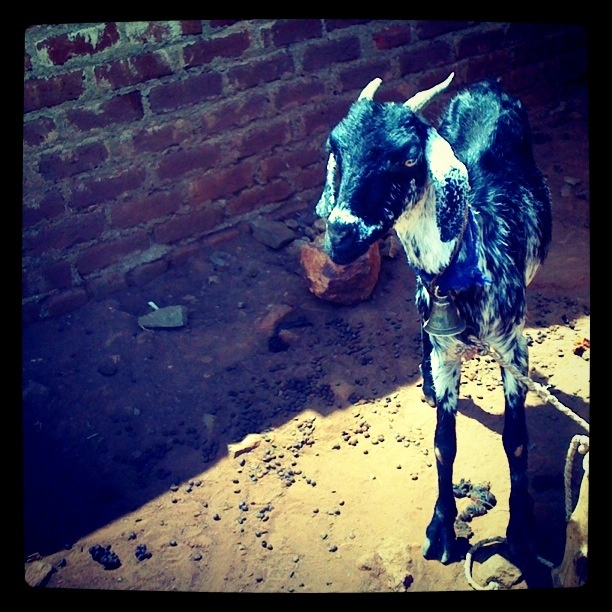 We provide loans to borrowers in rural India. Borrowers can purchase 6 goats with Rs. 20,000 ($400). The borrowers can then sell the milk for medicinal consumption.